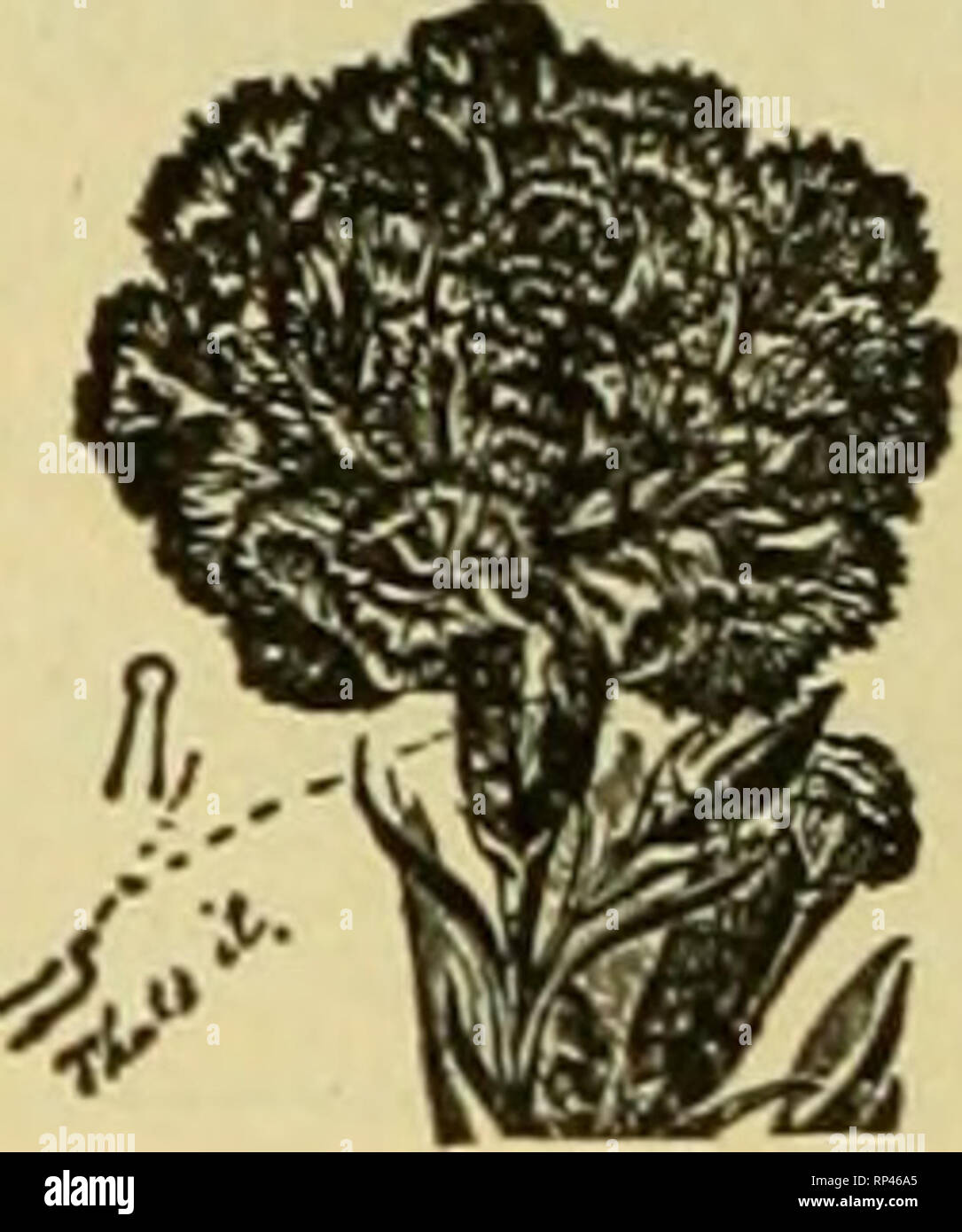 . The American florist : a weekly journal for the trade. Floriculture; Florists. 164 The American. Florist. Feb. 5, Index to Advertisers Advance Co The.. .Ill .Mpha Floral Co 14. Frey Alois P 125 Frey C H 146 Frey & Frey 145 Kriedman 143 Fronient H E 141 Furrow & Co 146 Galvin J bos F 145 Garland MlgCo 160 Gasser I VI Co 145 Gitalin & Co 162 Godineau R & M 150 Gorham & Limpus..l65 Graham A & Son 143 Grand Rapids Floral Lo 146 Grasselli Chemical Co 162 Grimm & Gorly 146 Gude Bros 144 Gunterberg M C 132 Guttman & Raynor (Inc) 141 Haile W E 149 Hardesty & Co .. Stock Photo