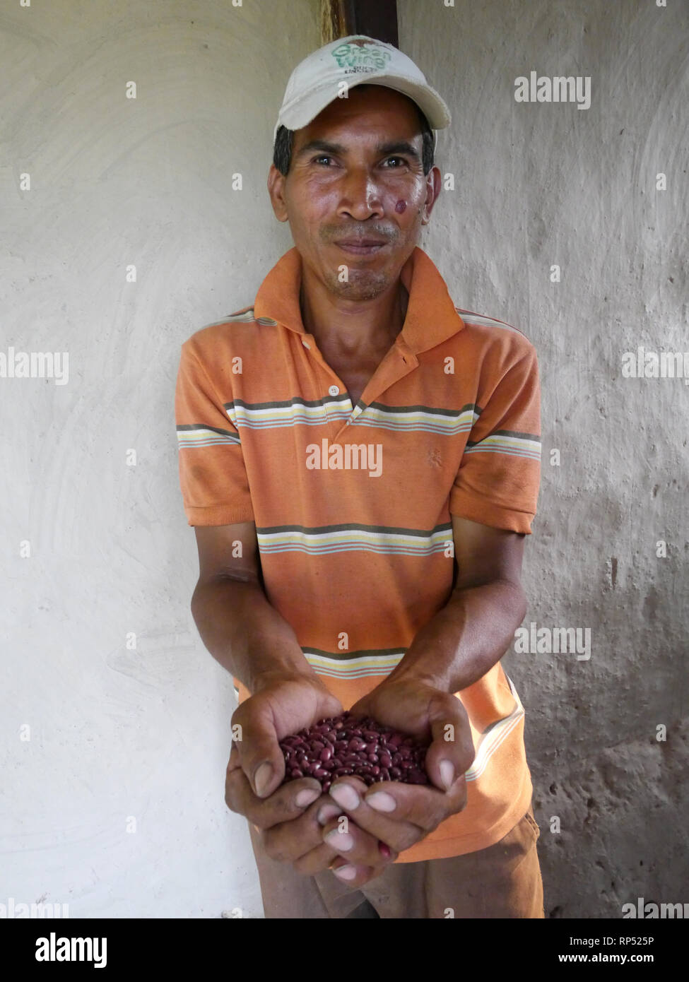 Nicaragua  FEDICAMP projects. Rio Abajo. Seed bank president, Jose Lopez (47). Hlding beans. - Stock Image