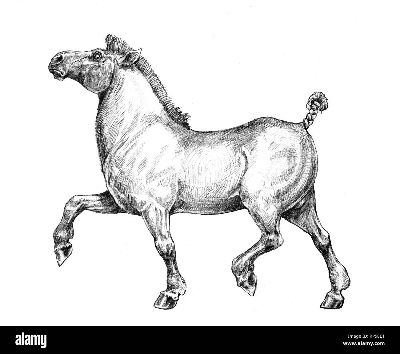 Thick Funny Horse Pencil Drawing Stock Photo Alamy