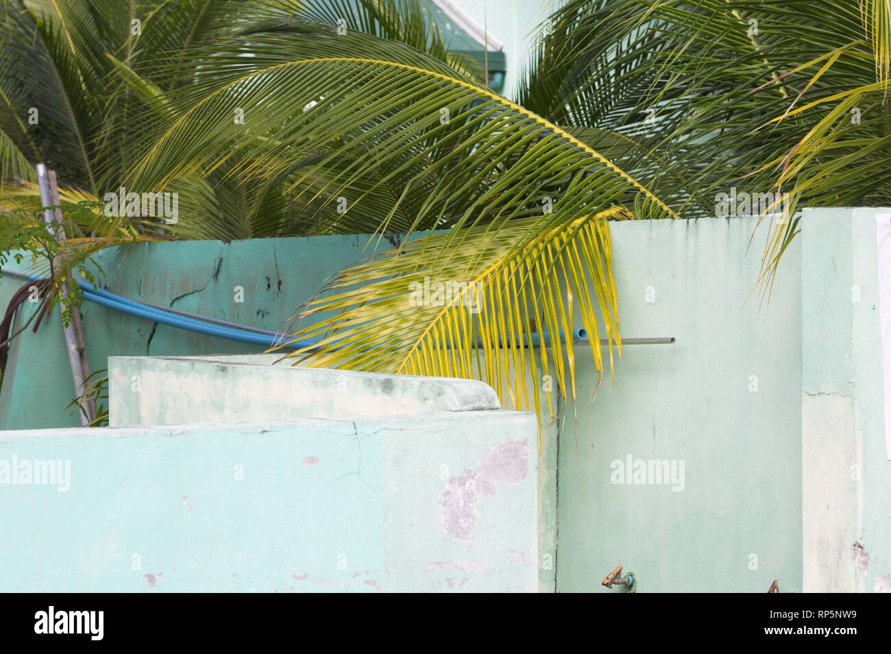 A palm tree over a white wall in a maldivian village (Ari Atoll, Maldives) - Stock Image