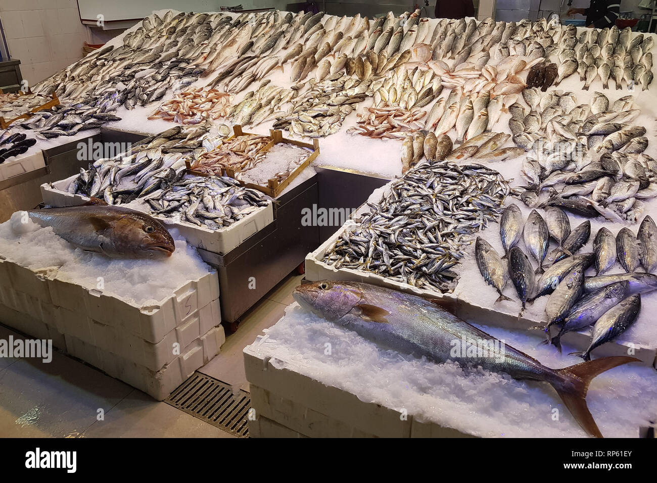 Top down view on multiple rows of various raw freshly caught fish on ice for sale. Mediterranian fish. - Stock Image