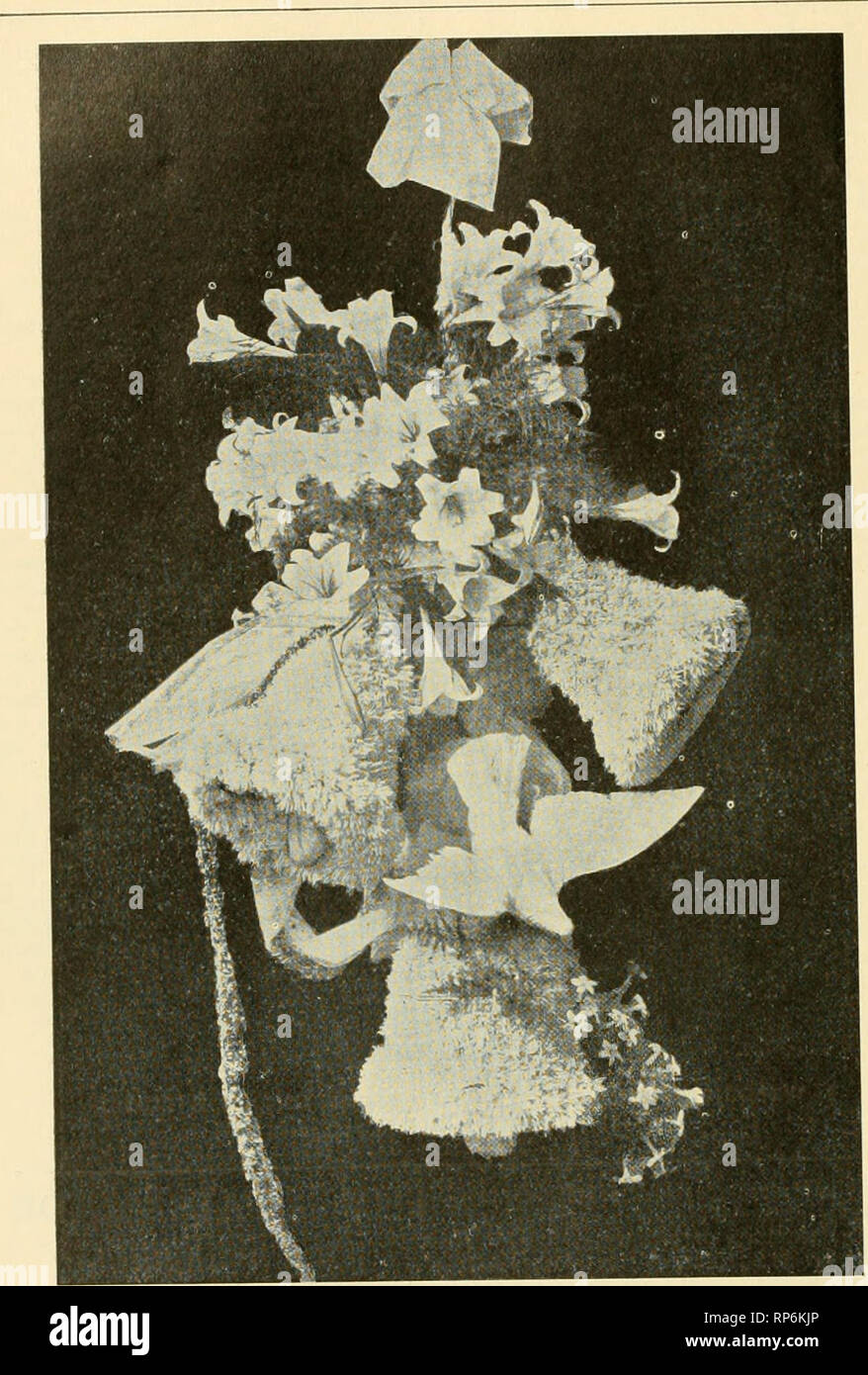 . The American florist : a weekly journal for the trade. Floriculture; Florists. 808 The American Florist. May II,. WEDDING DECORATIONS BY WILLS & SEGAR, LONDON, ENGLAND. BpUs used ill llic- ciMitiT of ;i b.iwi-r of p:ilnis iiiid f.Tiis. and flowers. The idea should be to cre- ate the best effect possible with plants of suitable habit not to reproduce a wholesale flower store remarkable only for the quantity and the money value of the material used. At the Chlcag:o Parks. V.SHINGT0N PARK. The bedding plant problem at Wash- ington park is a pretty serious one, about 125,000 being annually - Stock Image