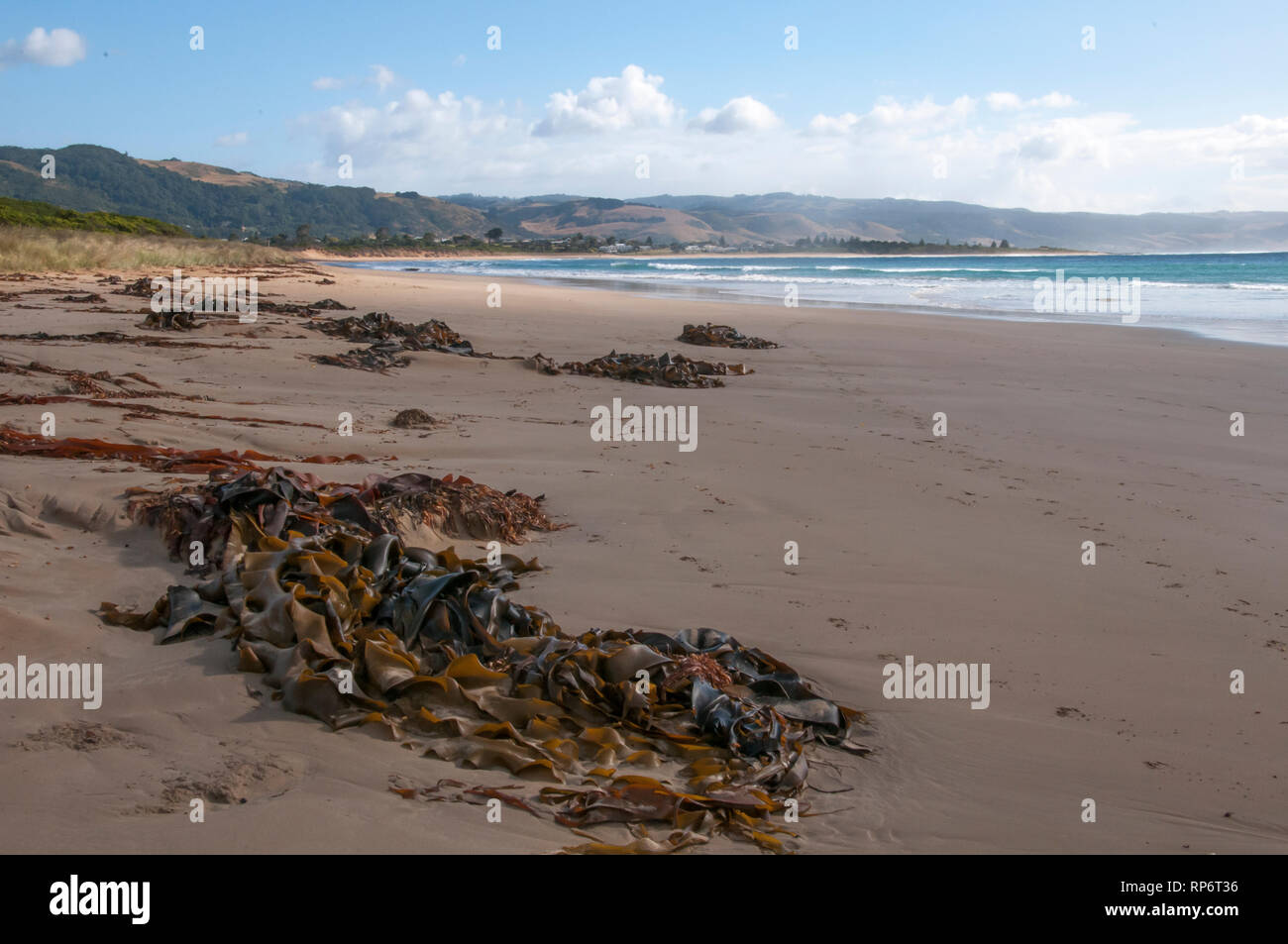 Kelp washed up on the ocean beach at Marengo, Great Ocean Road, Victoria, Australia Stock Photo