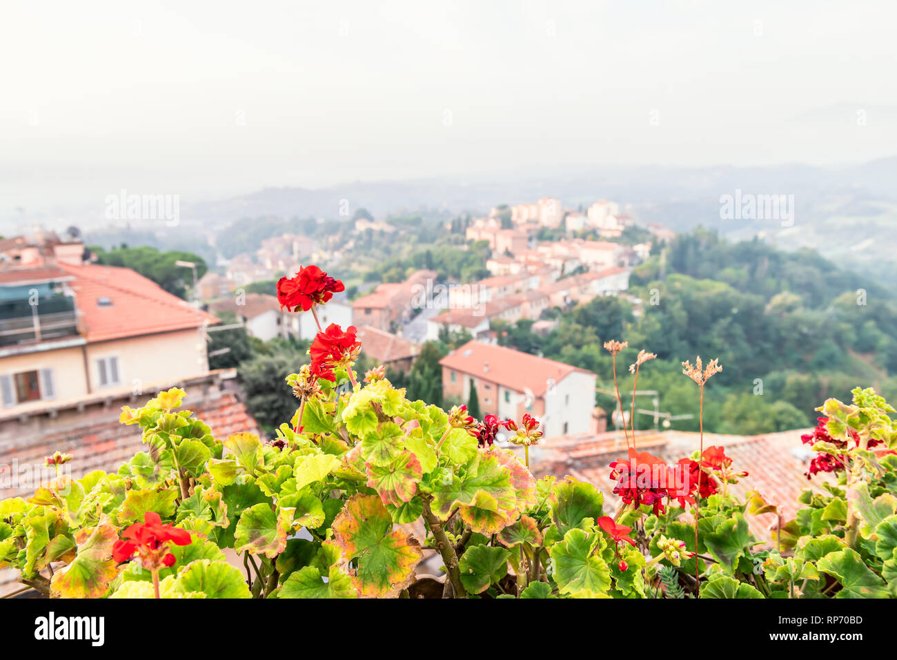 Chiusi Scalo houses buildings in Umbria, Italy or Tuscany with town cityscape and focus on red geranium flowers in garden foreground Stock Photo