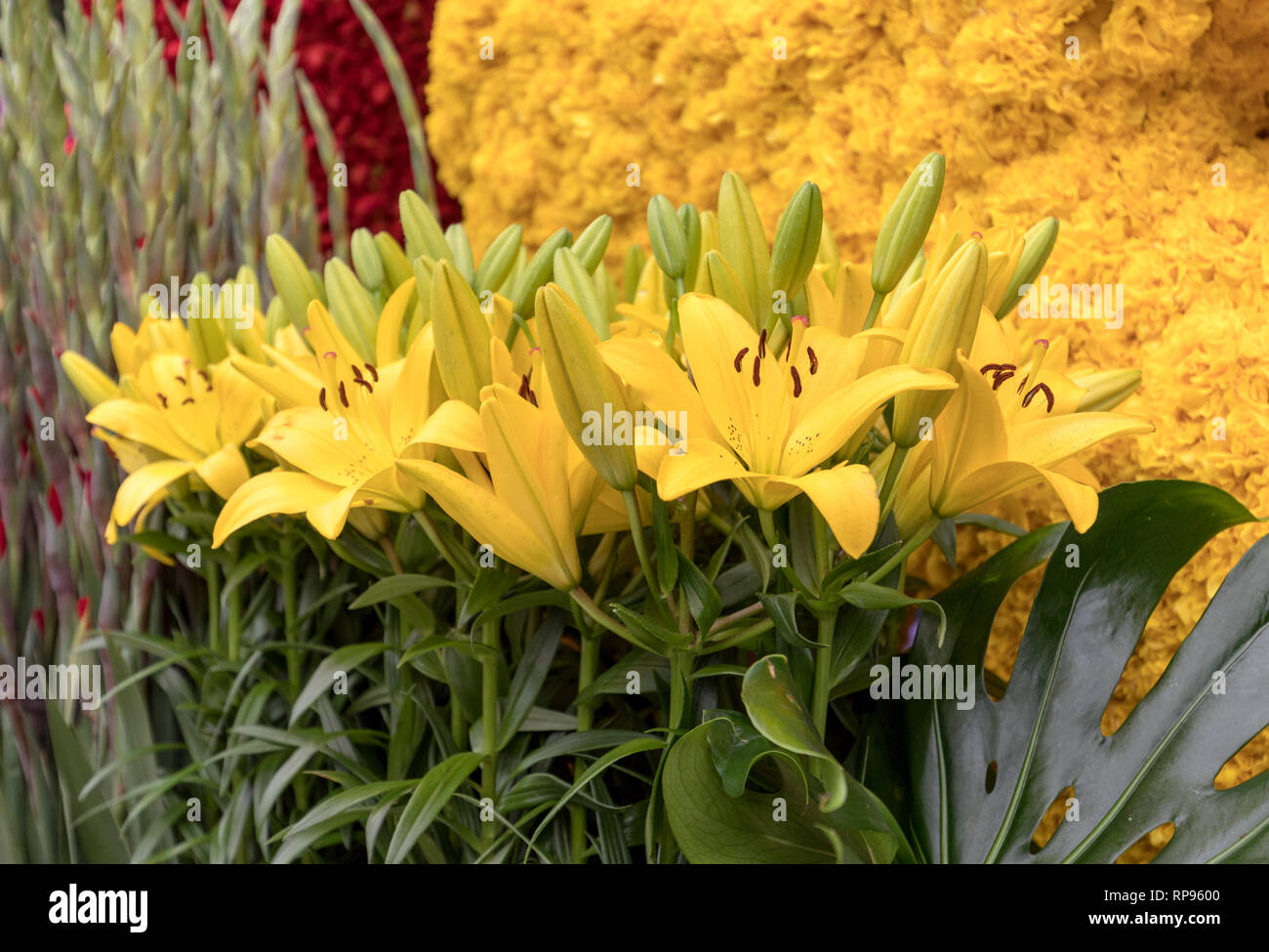 Floristic decoration with yellow lilies and tulips Stock Photo