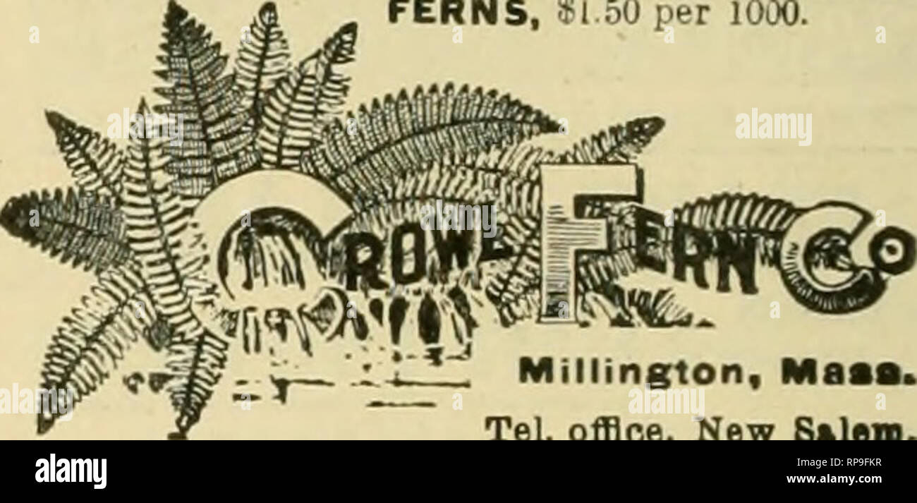". The American florist : a weekly journal for the trade. Floriculture; Florists. ^:3^^f^,^^S»;^S^^ 84 HAWLEY STREEl I, ^MOT^n^'i^^s.%o^V^.»n.00 medium 10no6-'O00 "" "" culls 30'@ 8.00 "" Bride. Bridesmaid 4 00@ li 00 "" extra 8UU^J2no Liberty 4,onoiu00 Carnations 1 00® 2.i 0 Fancy 3ro@ 4.00 Violets 30® 50 r.ilv of thevallev 3 Ot® 3 00 Hairisii lilies 6.00® .? 00 Siuilax.. 10.011® 16 00 Adiantum 75® 1.00 Asparapns 3500@51.0O Roman Hyacinths, P. W. narcissus l.fO® 9.f 0 L>alfodils 1.00® 3.00 Tulips 3.0 @ 3.0J Philadelphia. Feb. 17. Roses, Tea 4.00® 8 00 "" extra I;0ii@l500 - Stock Image"