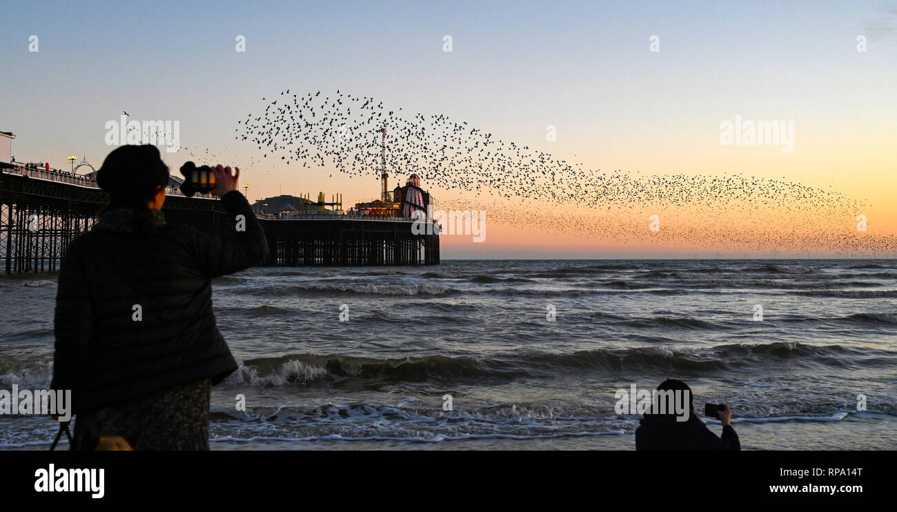 Brighton UK 20th February 2019 - Visitors and birdwatchers enjoy a spectacular starling murmuration over Brighton Palace Pier this evening - Stock Image