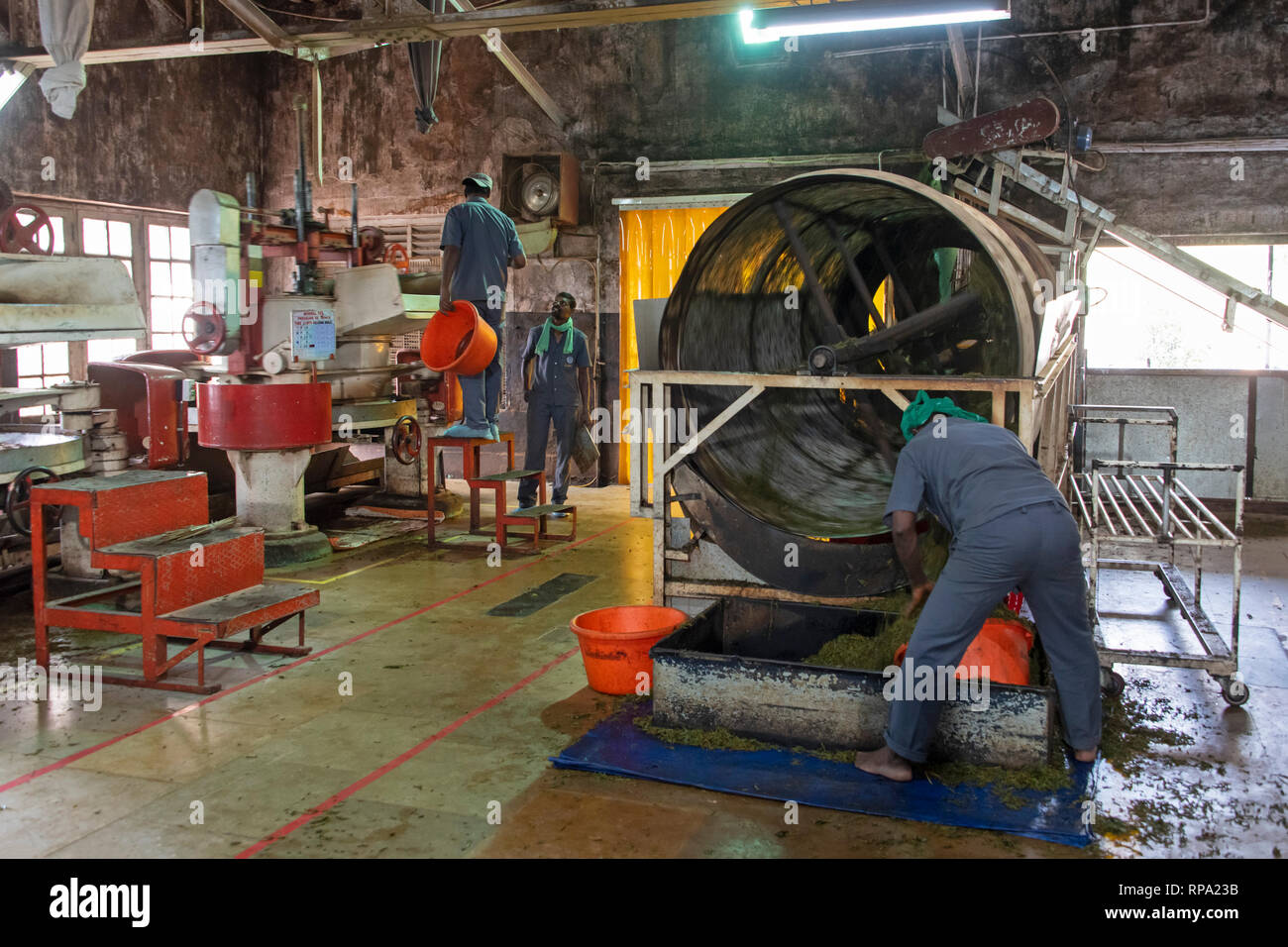 Workers at work in the Lockhart tea factory using traditional methods and machinery.  This is the drying process. Stock Photo