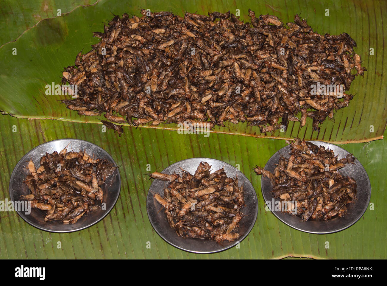 Grilled grasshoppers on a thai market in Bangkok, Thailand - Stock Image
