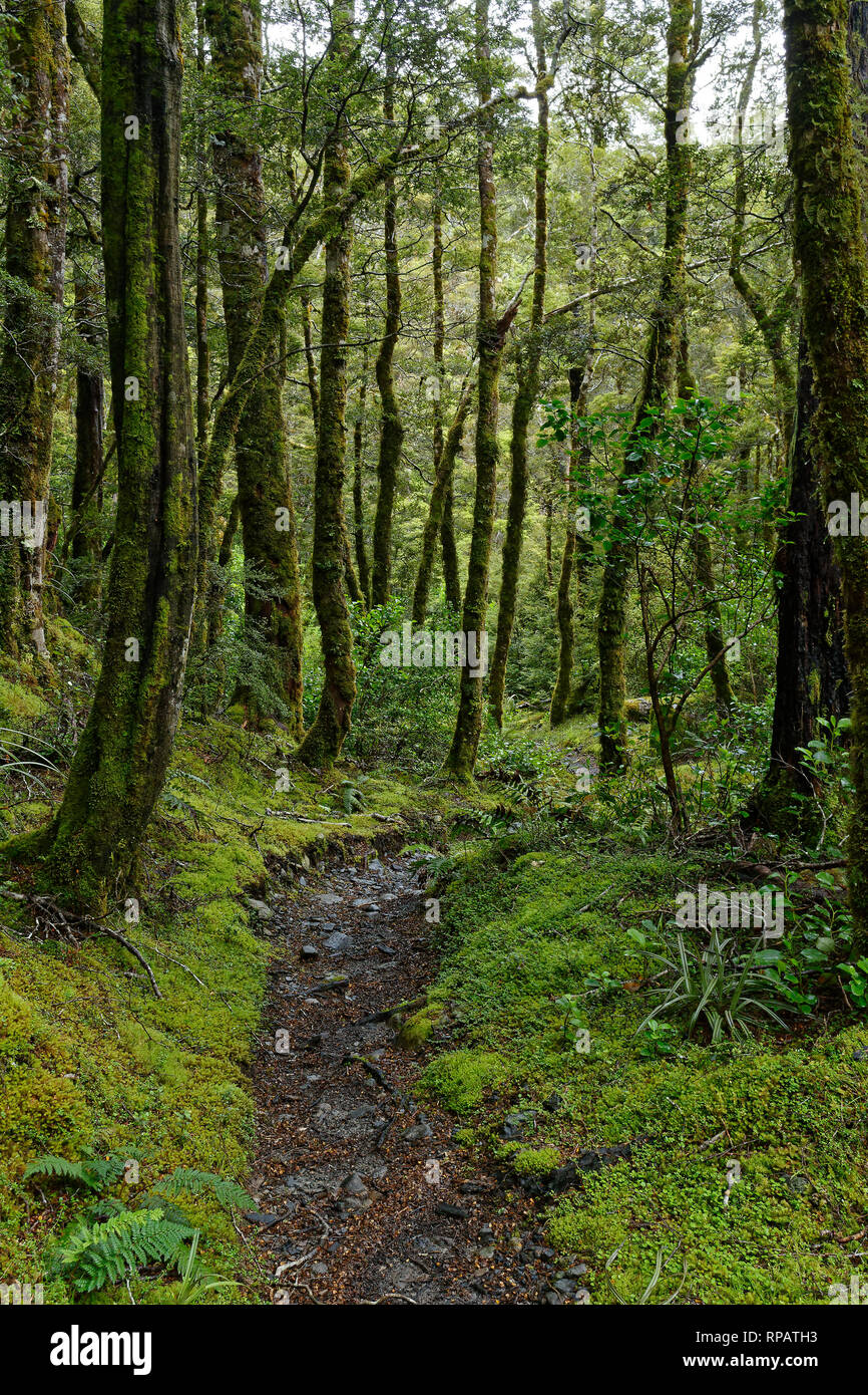 Take the path less followed, St James Walkway, New Zealand - Stock Image