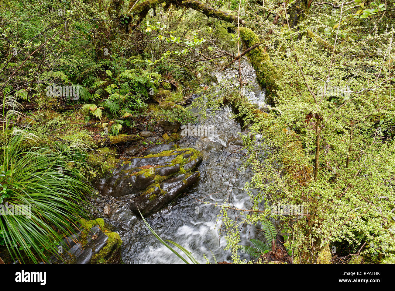 A water flowing through native forest in the St James Station, New Zealand Stock Photo