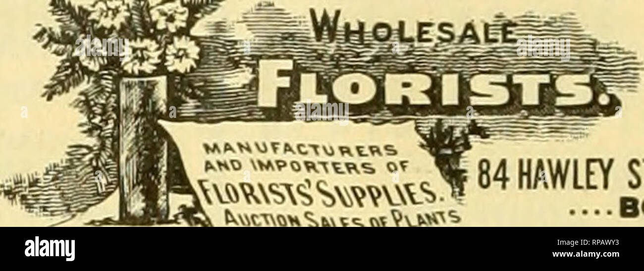 """. The American florist : a weekly journal for the trade. Floriculture; Florists. 538 The American Florist. Oct. 29. Ihfi Leo Niessen Company 1217 Arch Street, -WHOLESALE FLORISTS Stora open from 7 A. M. to 8 P. M. PHILADELPHIA, PA. The Cleveland Cut Flower Company, WHOLESALE CUT FLOWERS, FLORISTS' SUPPLIES, WIRE DESIGNS. 52 and 54 High Street, CLEVELAND, OHIO. WELCH BROS. IS F»iro-vl*xoe Street. All Varlalia. FLOWERS In Season. FANCY and DAGGER FERNS- FLORISTS' SUPPLIES all kinda. Long Distance Telephone, 6268-6267 Main. i!^F^Wji!ijY/&sC%. ?H. v«,.,,,,. """", ^ j4 u^^^fY STREET. BOSTON. HARDY - Stock Image"""