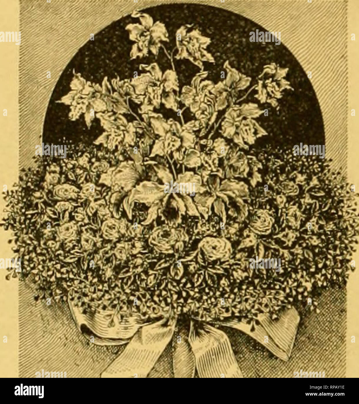 . The American florist : a weekly journal for the trade. Floriculture; Florists. 566 The American Florist. Aug. /, be inconsistent in our dealings or to under-value either our services or our goods; such things do not tendto impress people favorably concerning the trade. Having at divers times indulged in the popular pastime of abusing the Puritan rose I desire at this time to take some of it back, inasmuch as I have a plant out- doors that during the past two months has given me a goodly number of fine, pure white blooms. The plant is grow- ing vigorously in a very stiff soil and every shoot  Stock Photo