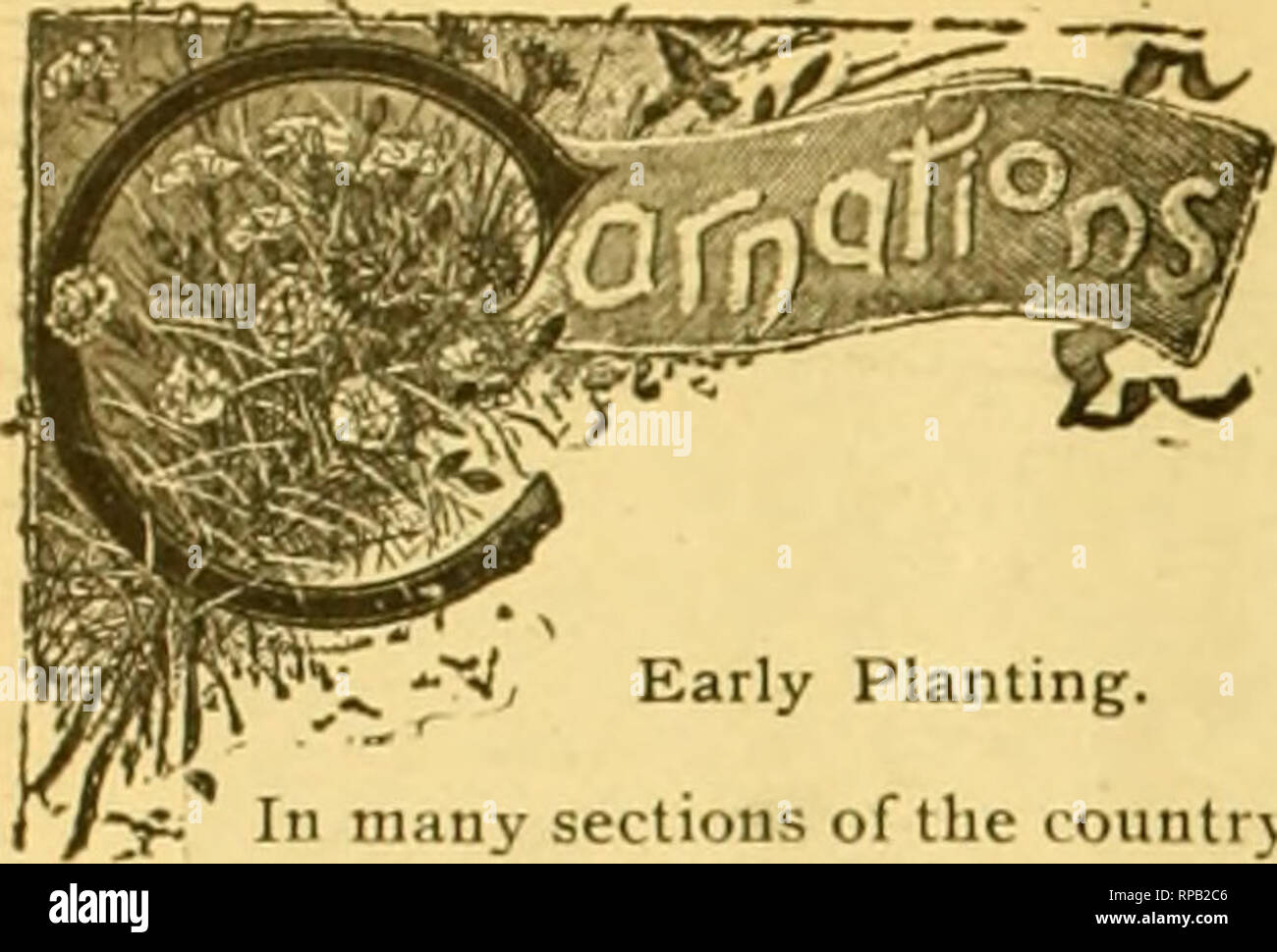 . The American florist : a weekly journal for the trade. Floriculture; Florists. 398 The American Florist. April yj.. Early Planting. f-y. In many sections of the country, the weather will now be sutticiently open, and the ground in good enough condition for planting out young carnations for next season's use. I am inclined to lay great stress on early planting for carna- tions and all similar stock—a touch of frost won't hurt them, providing they have been properly handled—and it is very important to get them established before hot weather sets in ; during their subsef ueut treatment, have an - Stock Image