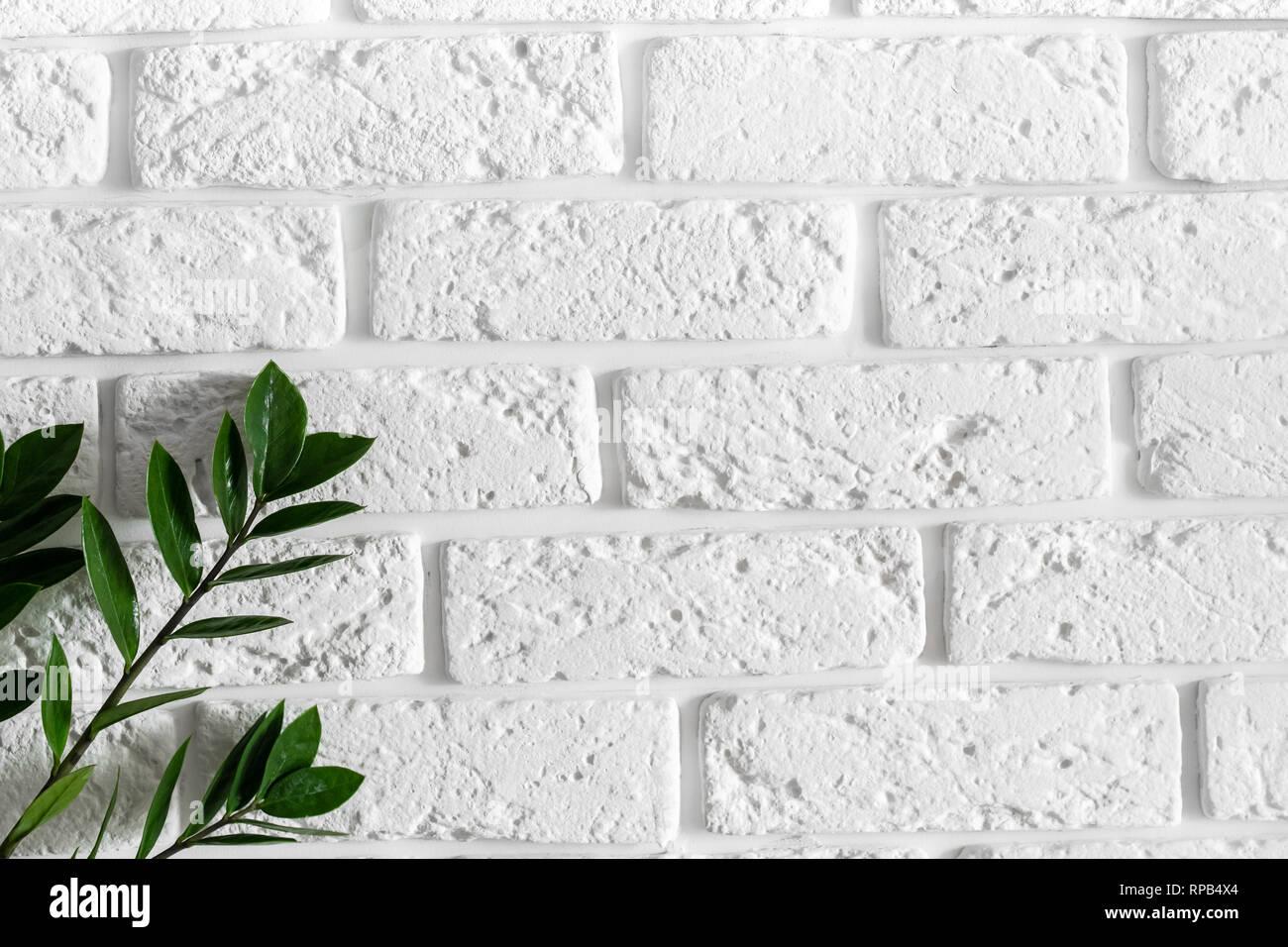 Green Plant Branch On White Brick Wall Modern Home Interior Design Background Stock Photo Alamy