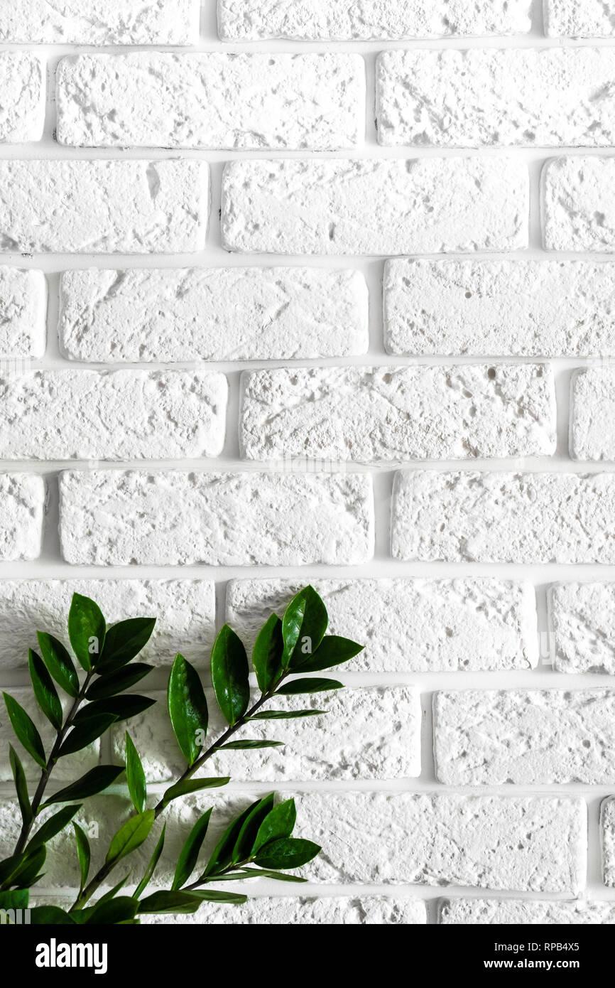 Green Plant On White Brick Wall Modern Interior Design Vertical Background Stock Photo Alamy