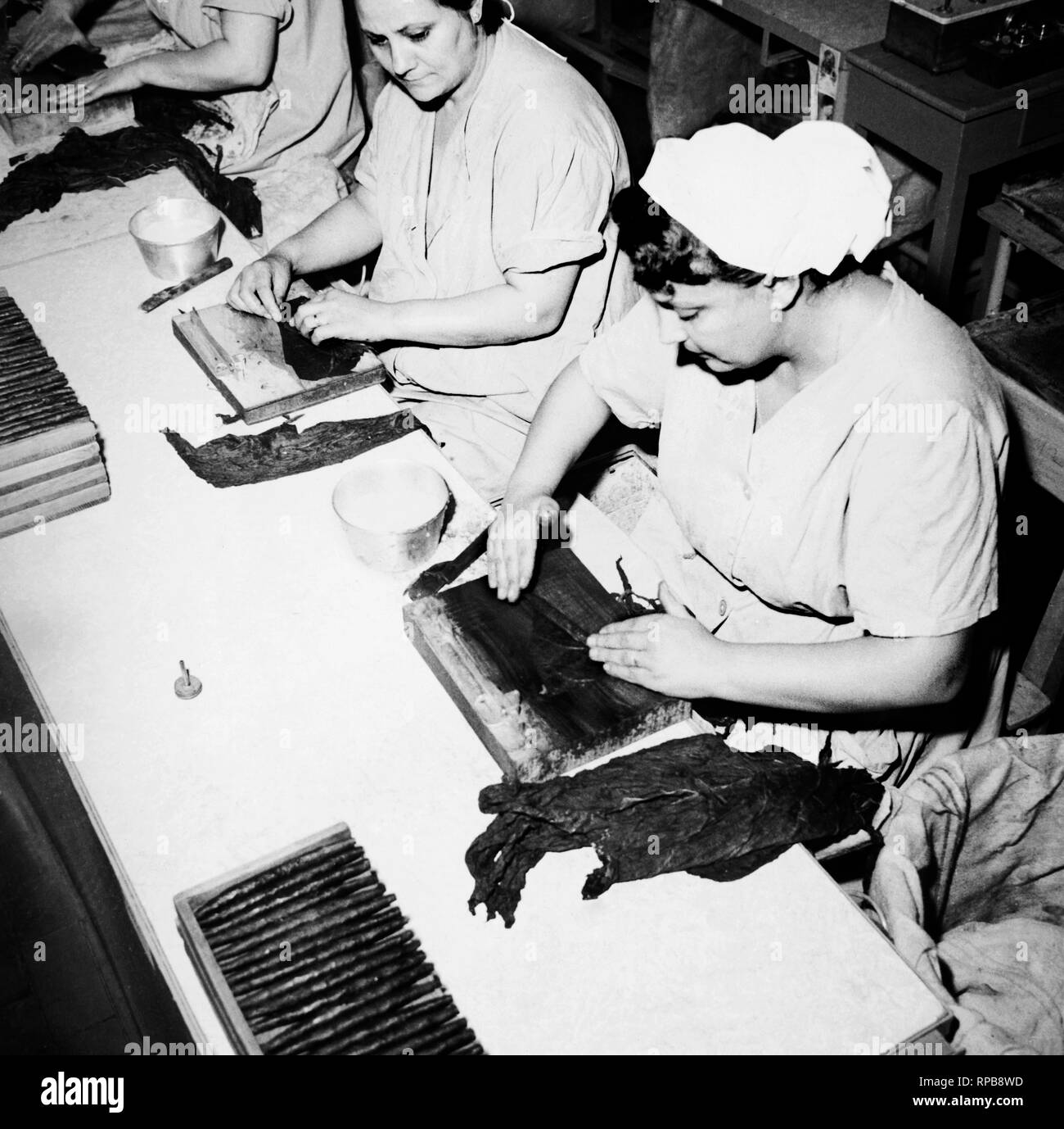 tobacco factory, cigars production, italy 1963 - Stock Image