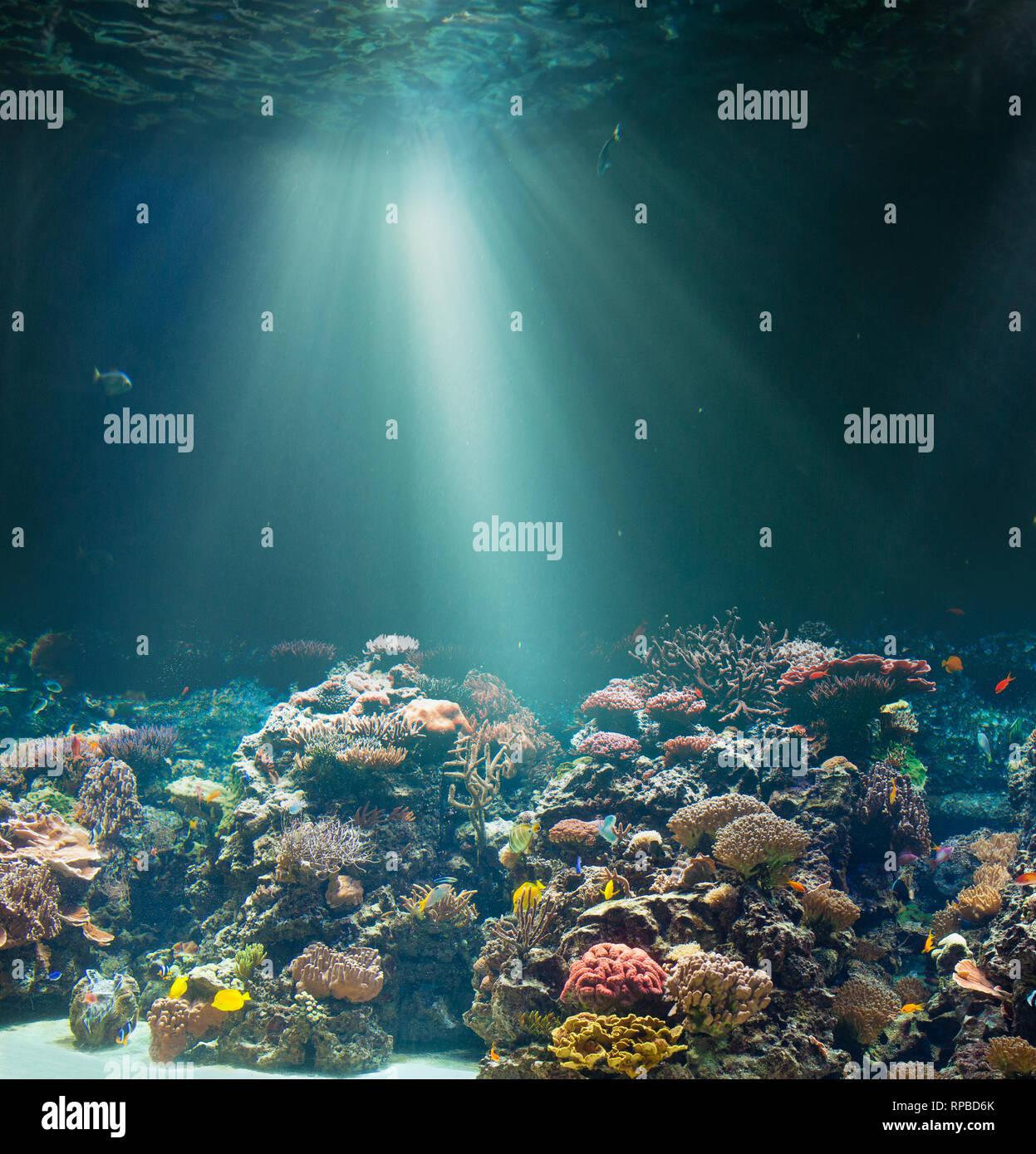 Sea or ocean seabed with coral reef. Underwater view. - Stock Image