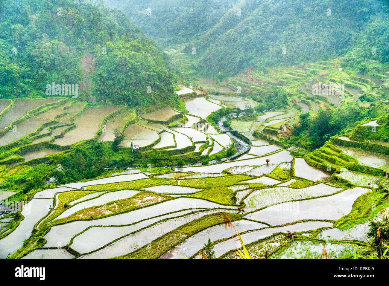 Banaue Rice Terraces in the rain. UNESCO world heritage in the Philippines Stock Photo