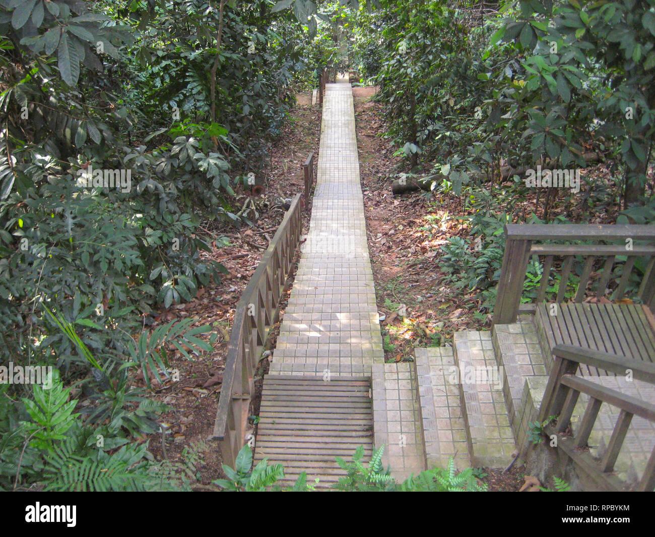 Trail through the jungle at KL tower, Kuala Lumpur, Malaysia - Stock Image