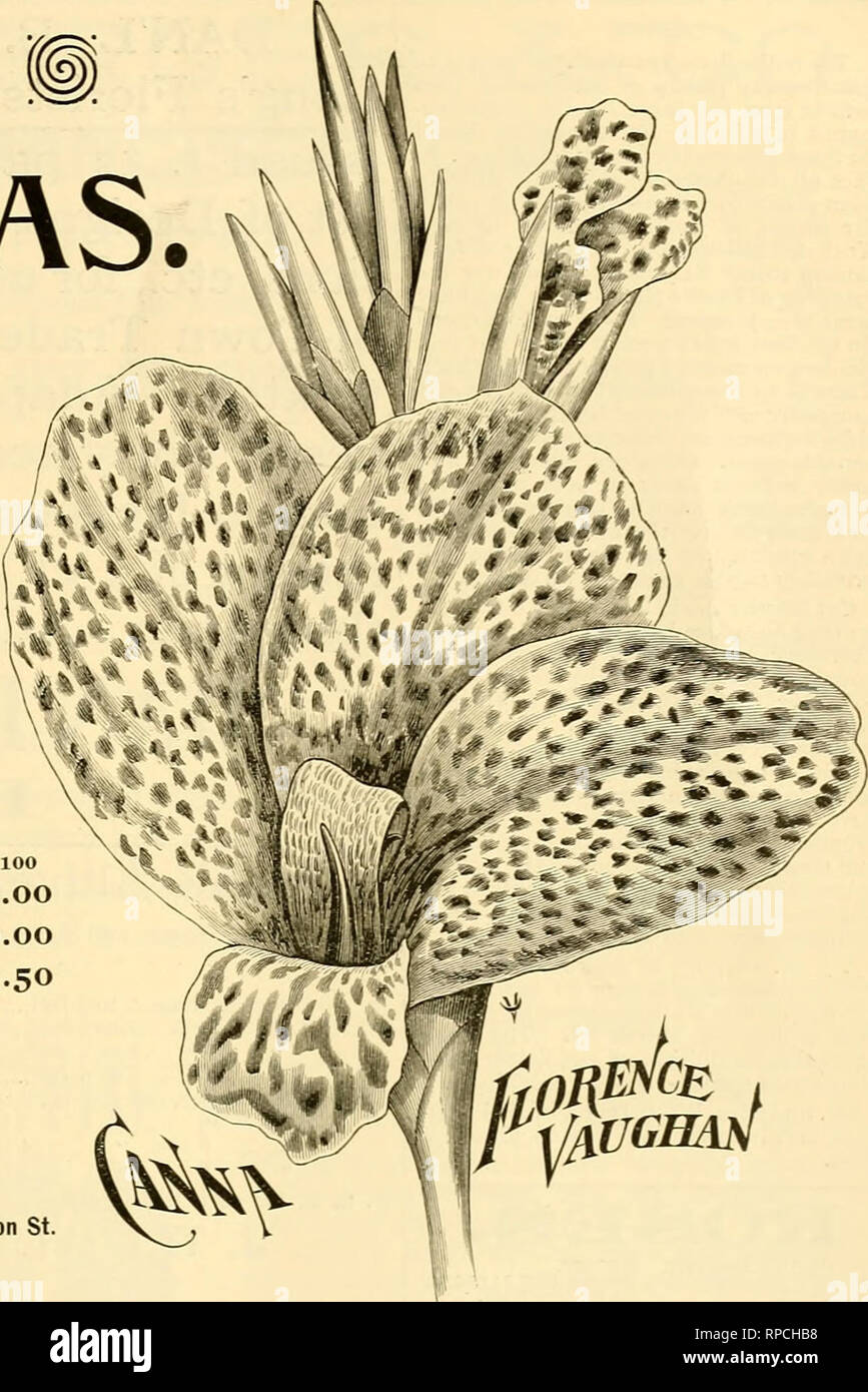 """. The American florist : a weekly journal for the trade. Floriculture; Florists. i8g4- The American Florist. 787 CROZY CANNAS. -*- * A2VK AJSJBi HEflDQUflRTERS For all the Novelties, and in ad- I'^'l'v^^'^-^^i^^^^'.V ''""""^"""" """" '^^ dition control EXCLUSIVELY Jft'^^ ^^^Mk''^ ^^ several erand varieties whicli we  4""""^- ?, ' *^*1* p.m,^» grand now offer for the fitzt time We will not be undersold on any of the list. Per 100 Canna, Florence Vaughan, $25.00 Calla, Elliott's Little Gem, 10.00 Canna, Alphonse Bouvier, 12.50 Our Spring Book for Florists Mailed Free, J. G. VflUGHflN, N - Stock Image"""