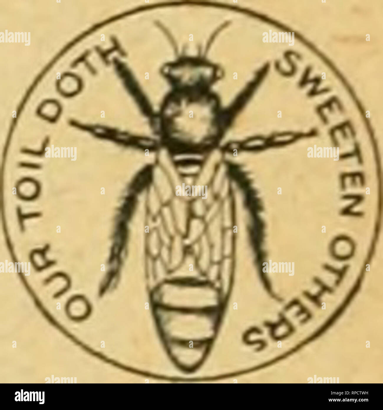 . American bee journal. Bee culture; Bees. QUEENS! Untested Oueens, Italian, 60 cents. Tested, $1.00. From honey-gathering stock. We keep in stock a full line of popular Apiarian Supplies. Catalog free. Apiaries-Glen Cove, I..!. J, J, STRINGHAM, 105 PaPK Pte, NCf M, N, Y. Please mention Bee Journal ?when ?writing A HANDY TOOL-HOIiDEB! Sent by Express, for $1.50 ; or with the Bee Journal one year—both for $2.00. Every Manufacturer. Miller. Carpenter. Cabinet Maker. Machinist. Wheelwright and Quarryman, Farmer, or any one using- a grind- stone, should have one of these Tool-Holders. One boy can  - Stock Image