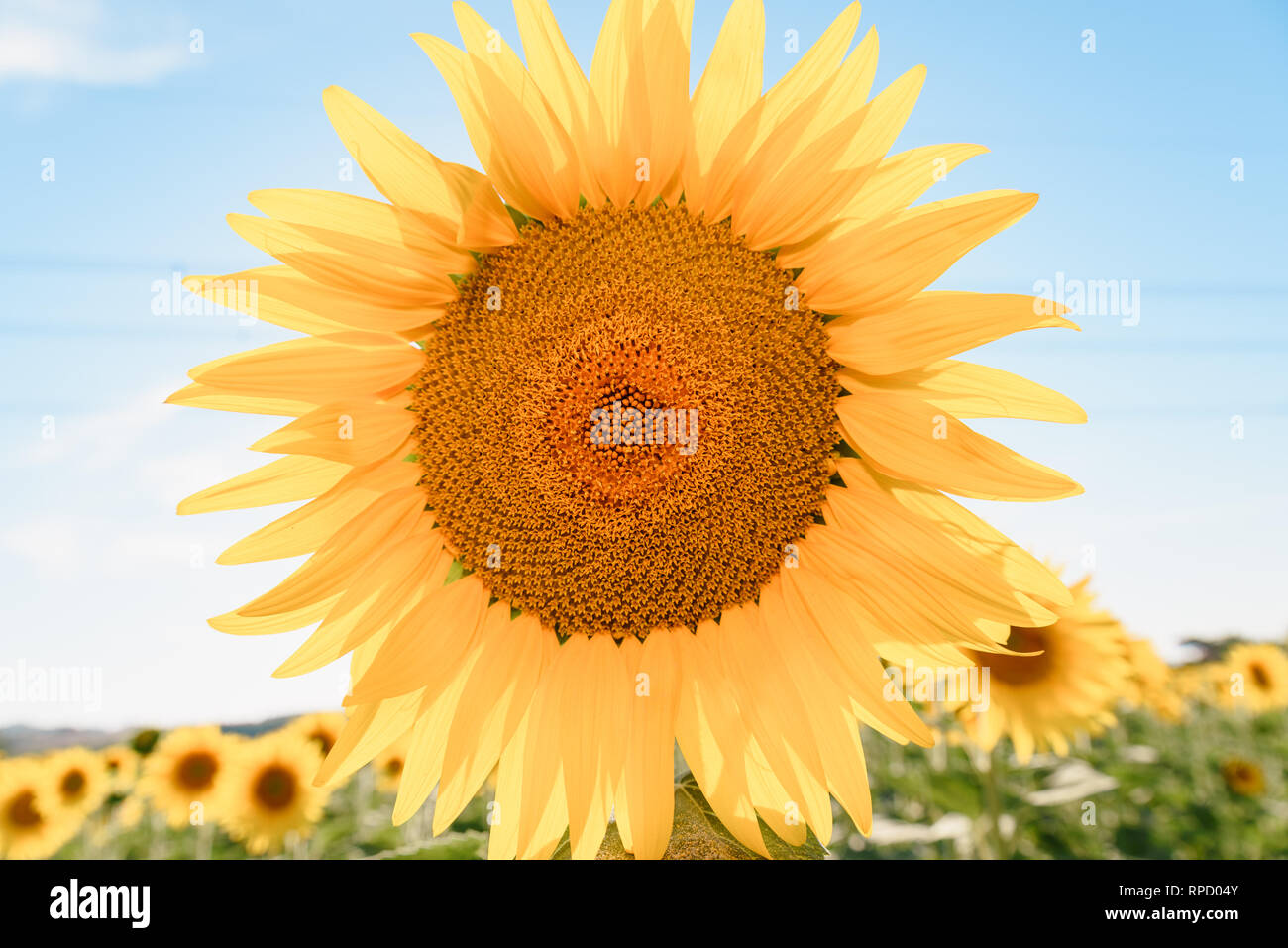 Tall Oil Stock Photos & Tall Oil Stock Images - Alamy