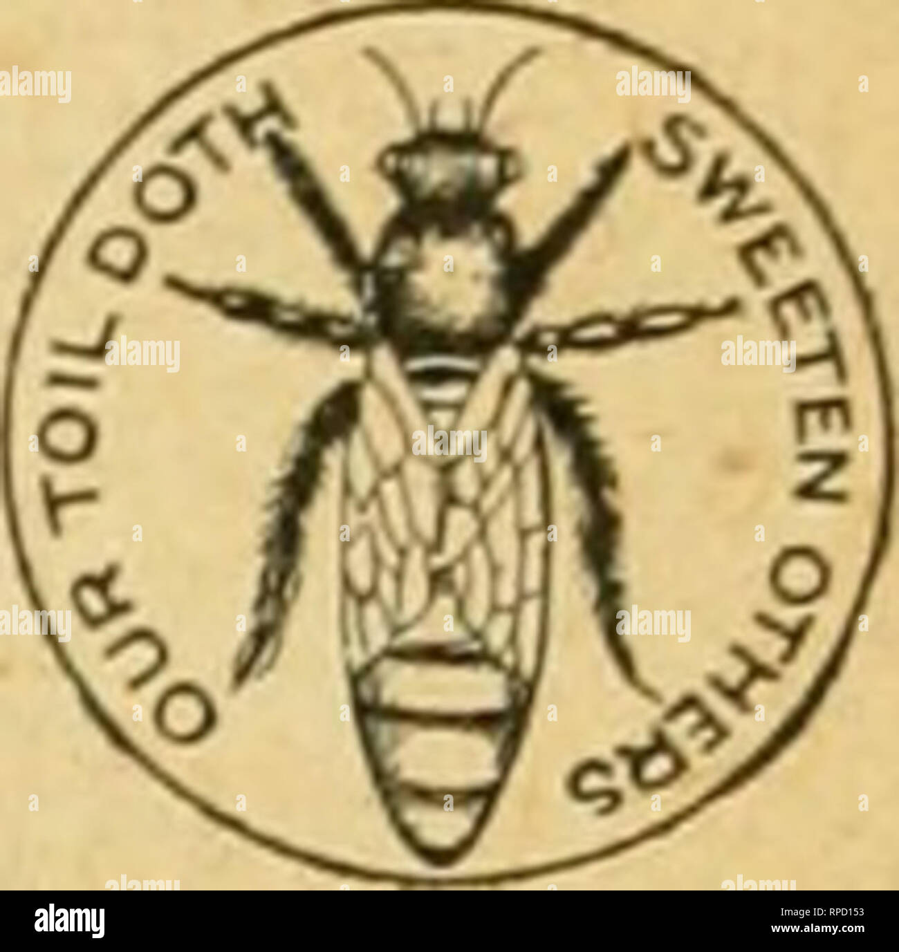 . American bee journal. Bee culture; Bees. QUEENS! Untested Queens, Italian, 60 cents. Tested, $1.00. From honey-gathering stock. We keep in stock a full line of popular Apiarian Supplies. Catalog free. Apiaries-GlenCove,L.I. I. J. STRIN&HAM, 105 Ml YXU, NBW M, N. Y. Please mention Bee Journal when writing A HAXD Y TOOL-HOLDER! Sent by Express, for $1.50 ; or willi the Bee Journal one year—both for $2.00. Every Manufacturer, Miller, Carpenter, Cabinet Maker, Machinist. Wheelwright and Quarryman, Farmer, or any one using a grind- stone, should have one of these Tool-Holders. One boy can do  - Stock Image