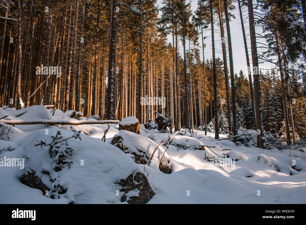 winter landscape in Harz Mountains National Park, Germany Stock Photo