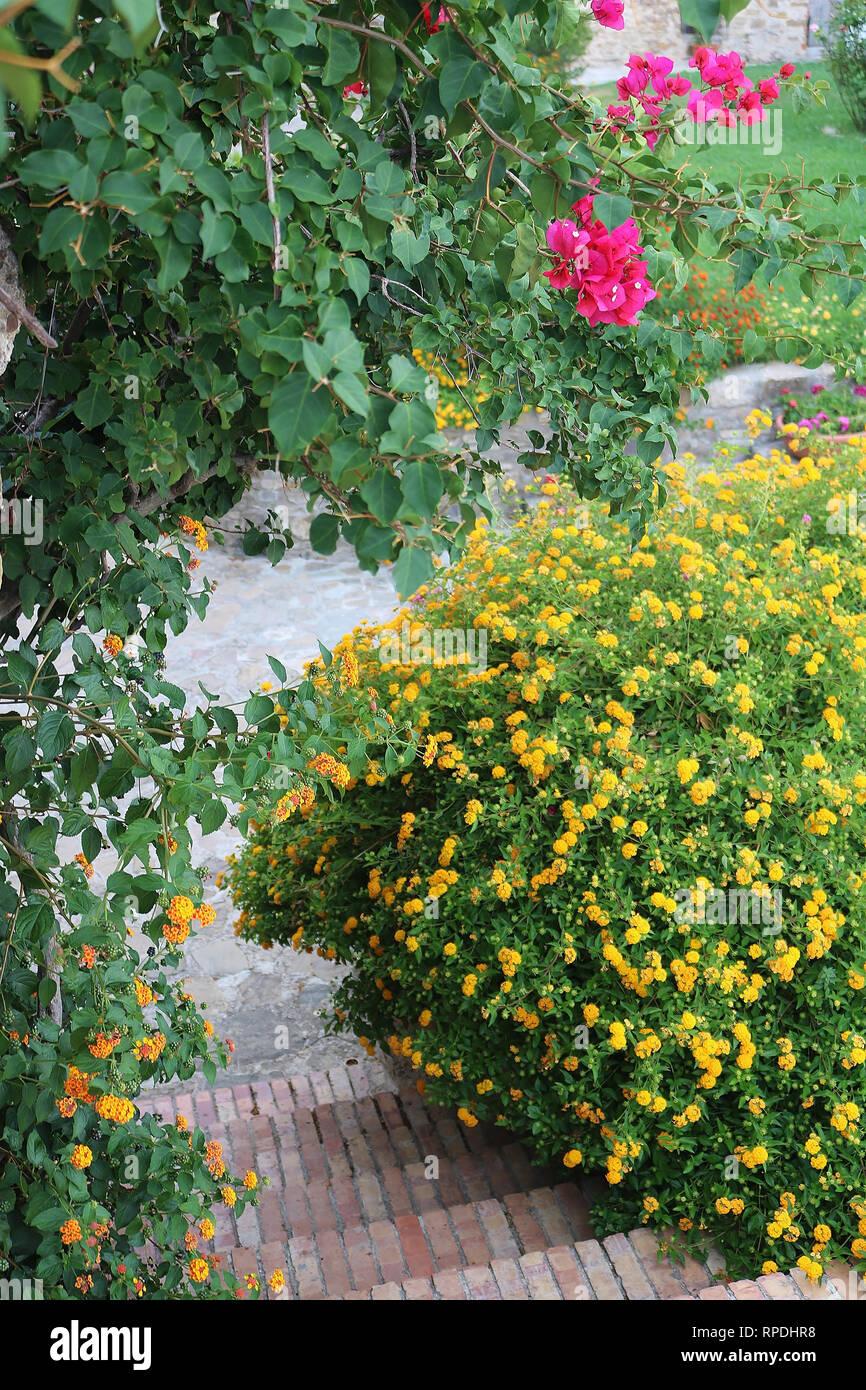 Mediterranean garden - Stock Image