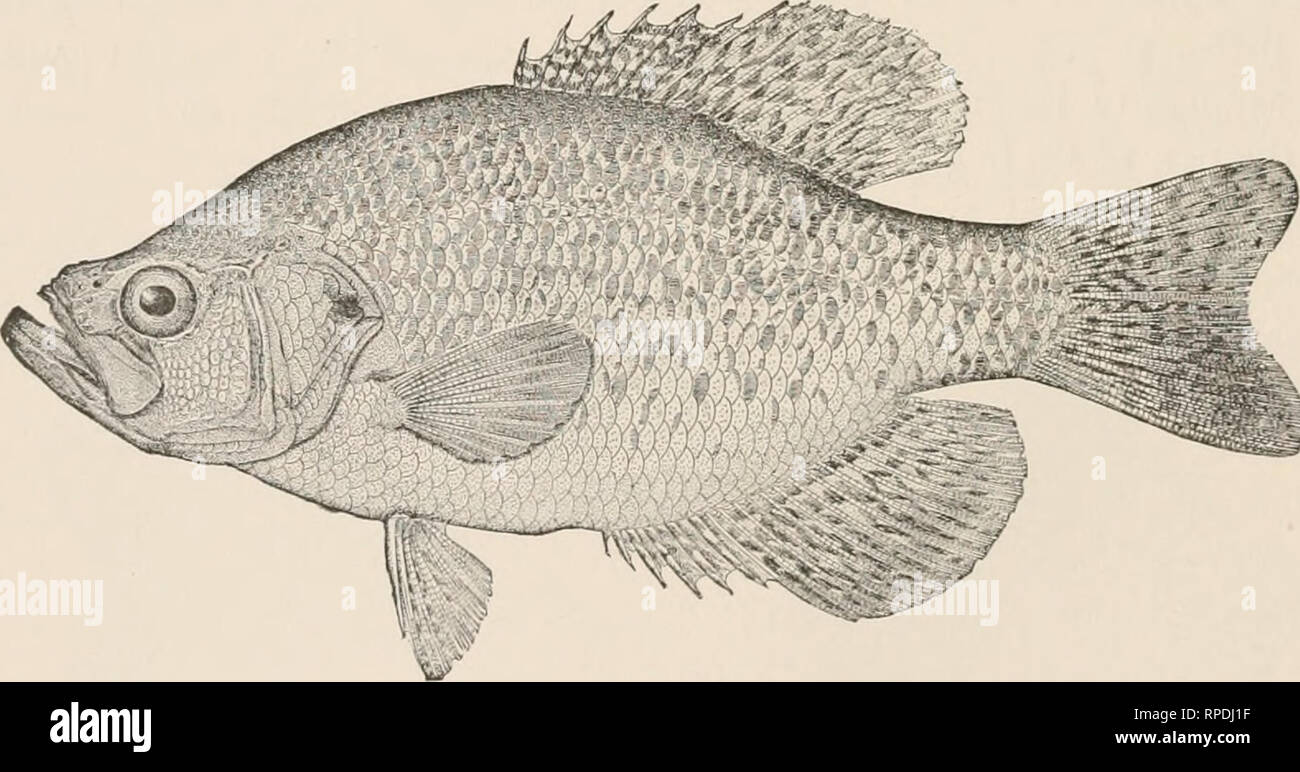 American fishes : a popular treatise upon the game and food fishes