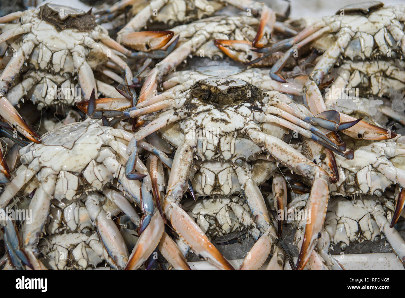 Fresh blue crab for sale at the modern fish market located
