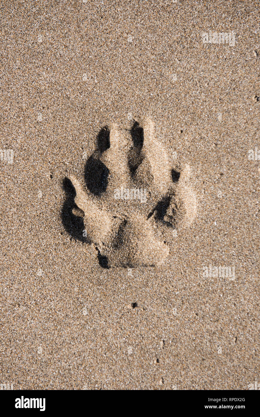 d81a8710bd54 Barry Island, Wales, United Kingdom. 21st February 2019. A dog's paw print