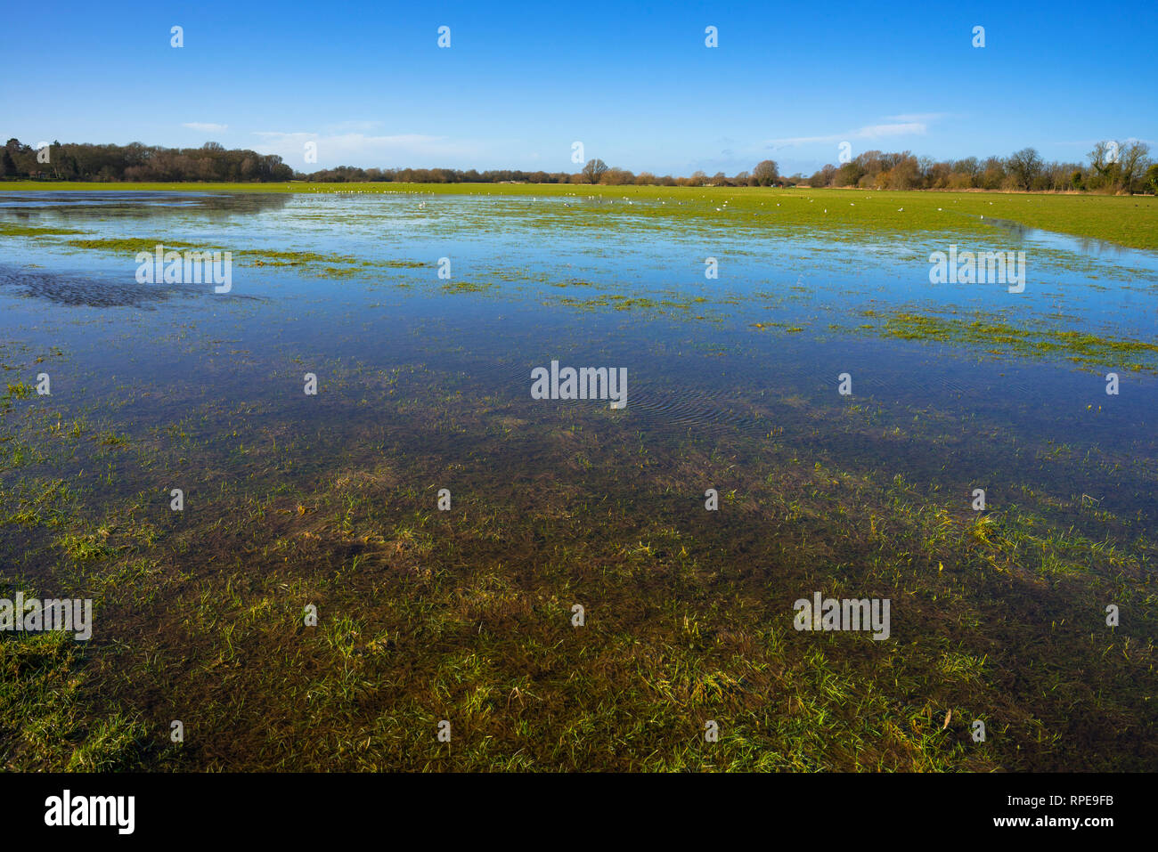Flooded meadow linking Houghton and Hemingford Abbots villages, Cambridgeshire, England, UK. - Stock Image