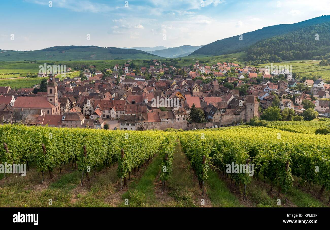 View of Riquewihr, Wine route in Alsace, France - Stock Image