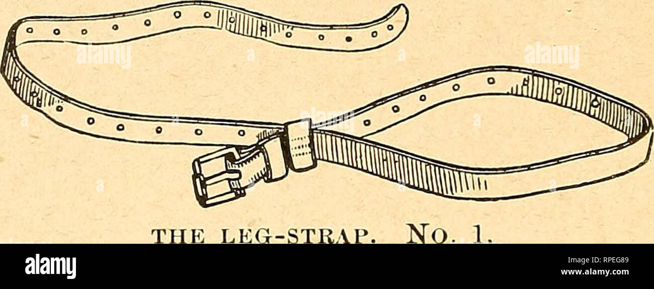 . The American farmer's horse book; a pictorial cyclopedia of facts concerning the prominent breeds ... Horses. 102 TPIE AMERICAN FARMER'S HORSE BOOK. The plan adopted in his case was to fix an iron staple to the door- post, and then running through this a strong leather strap, to which a spring-hook was attached, the opportunity was seized when the horse came open-mouthed to the door, and he was securely laid. THE LEG-STRAl hold of and drawn up to the staple, so as to compel him to allow the introduction of a bit. The grey colt at Mr. Anderson's was bitted; but the zebra was loose in his cage Stock Photo
