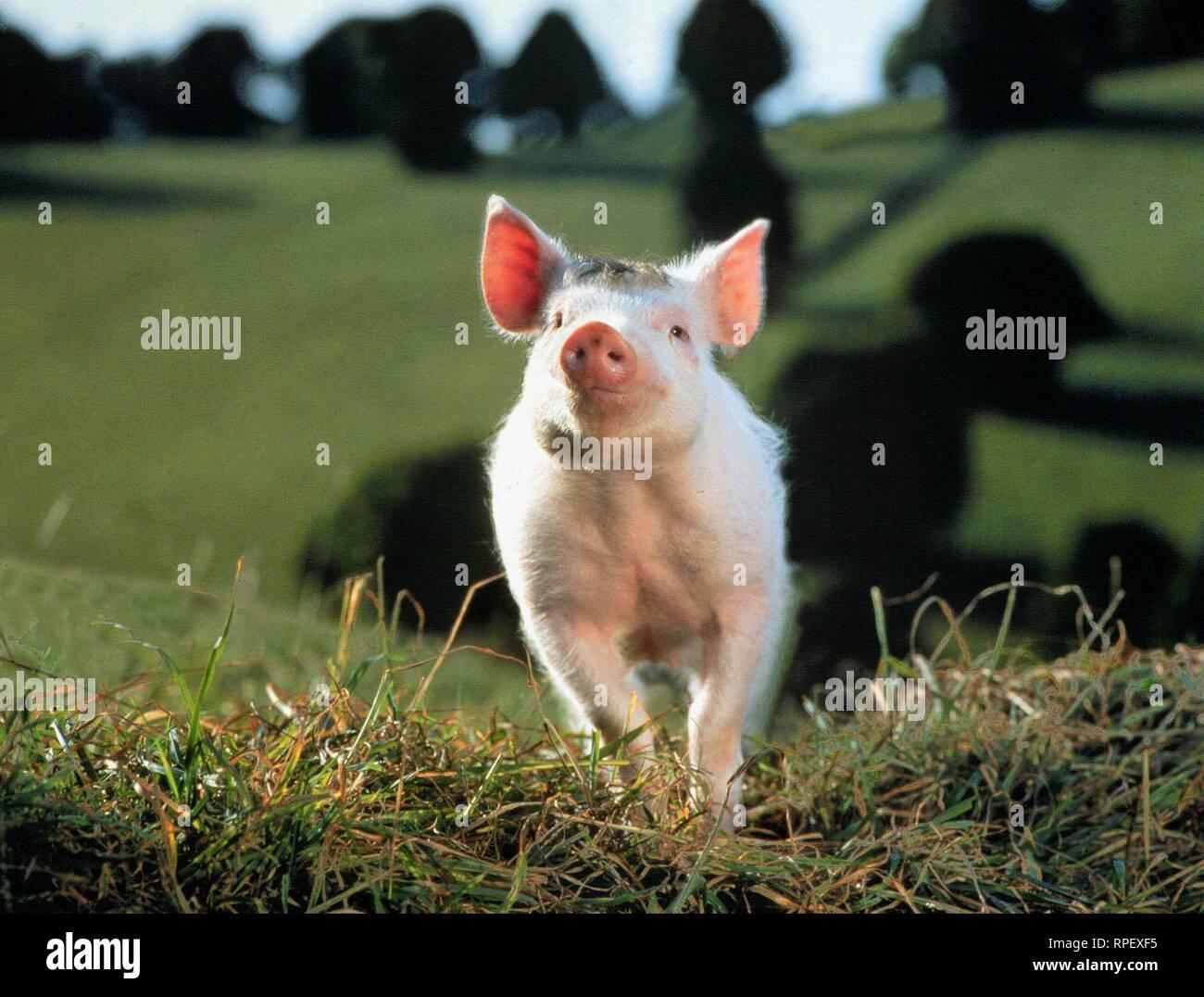ein schwein namens babe