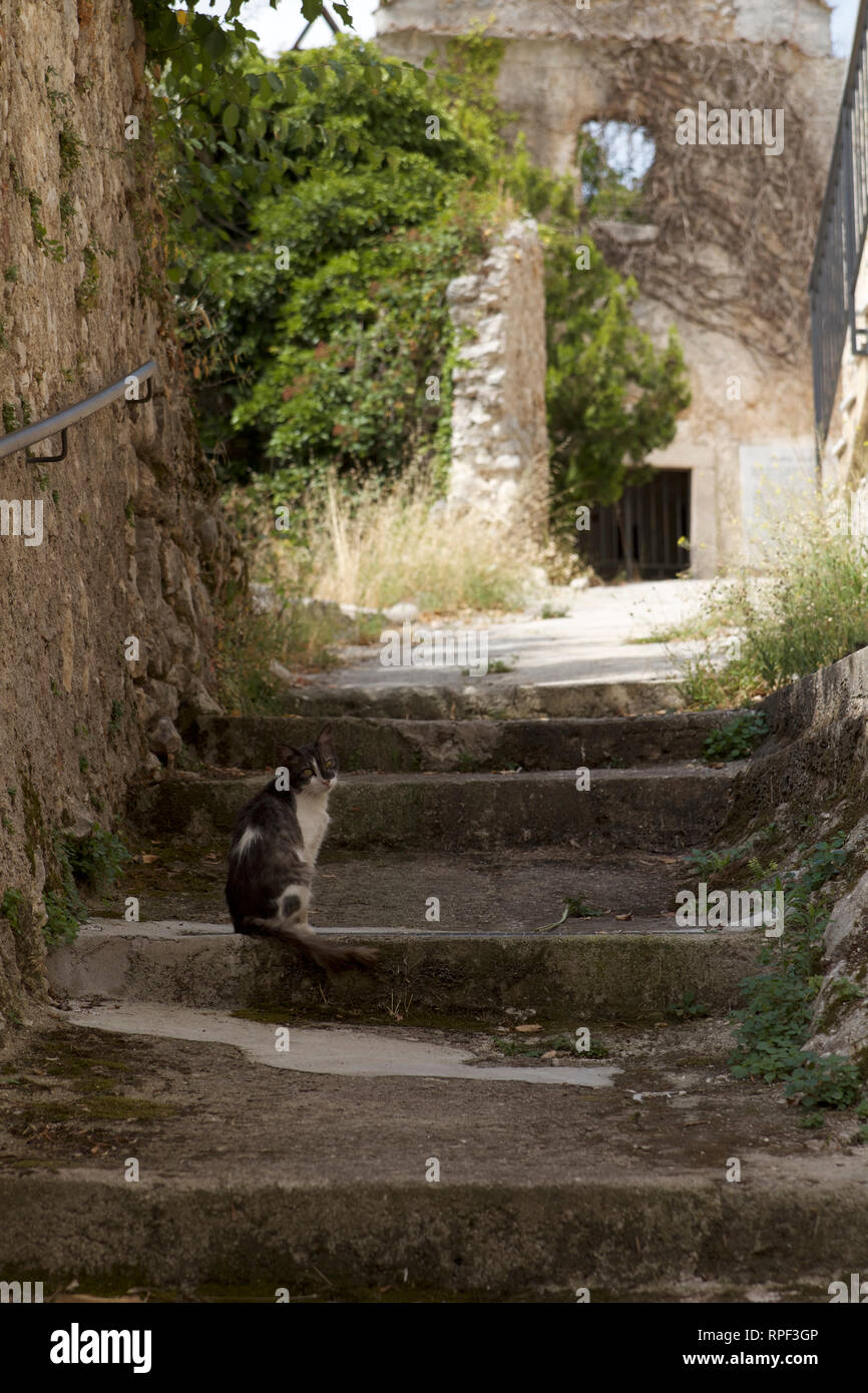 Alvito-Gray and white cat sitting on the steps which lead to a chapel - Stock Image