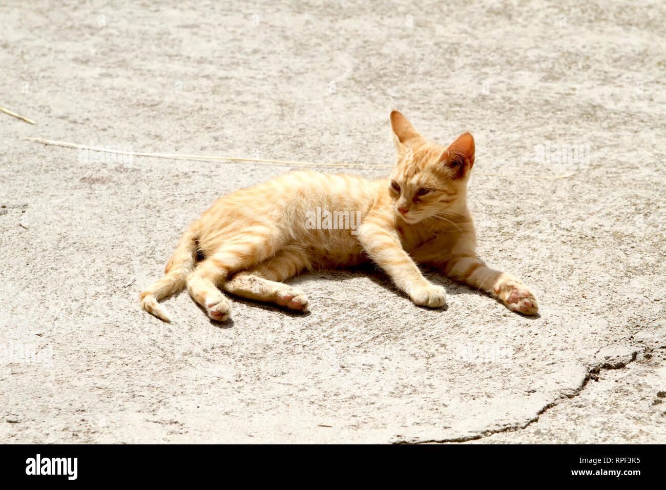 Alvito-Red cat resting on warm concrete - Stock Image