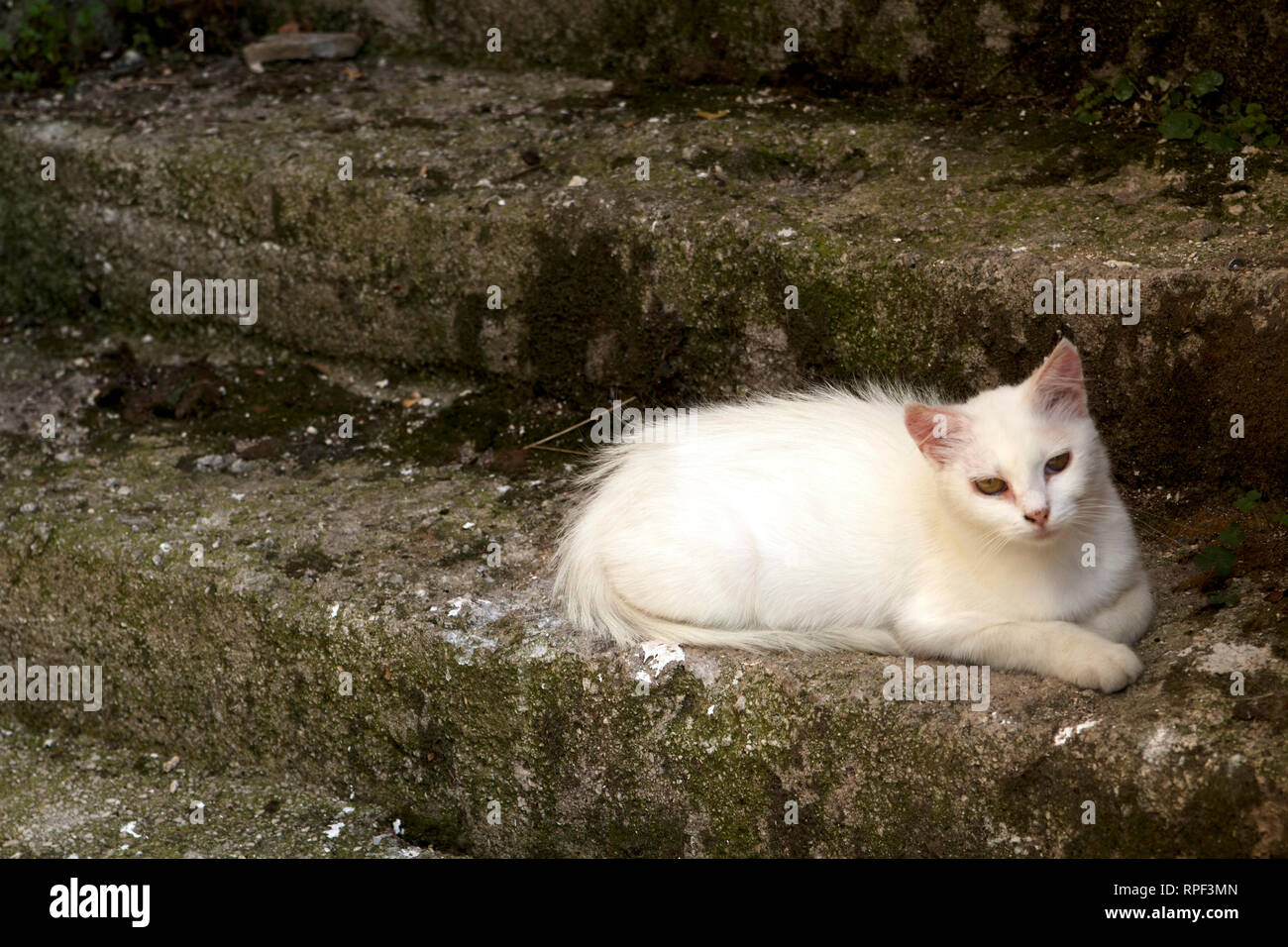 Flauschig Stock Photos Flauschig Stock Images Alamy