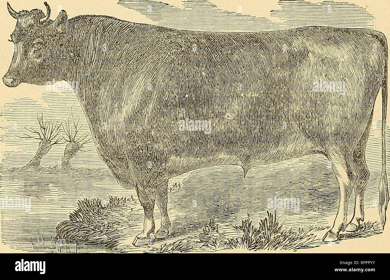 The American cattle doctor: a complete work on all the