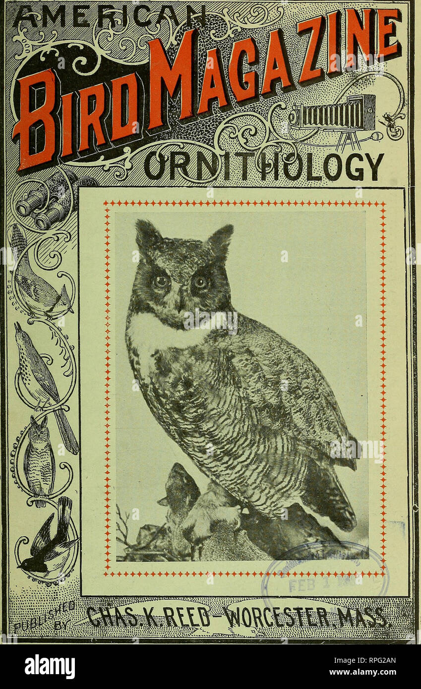 """. American bird magazine, ornithology. Birds. Vol. 5. No. 2. FEBRUARY, 1905. 10c a copy, $1 a year.. Entered > •"""""""" ''?'« • >'+>'-'=? """" ?*?'"""" i.1-.-
