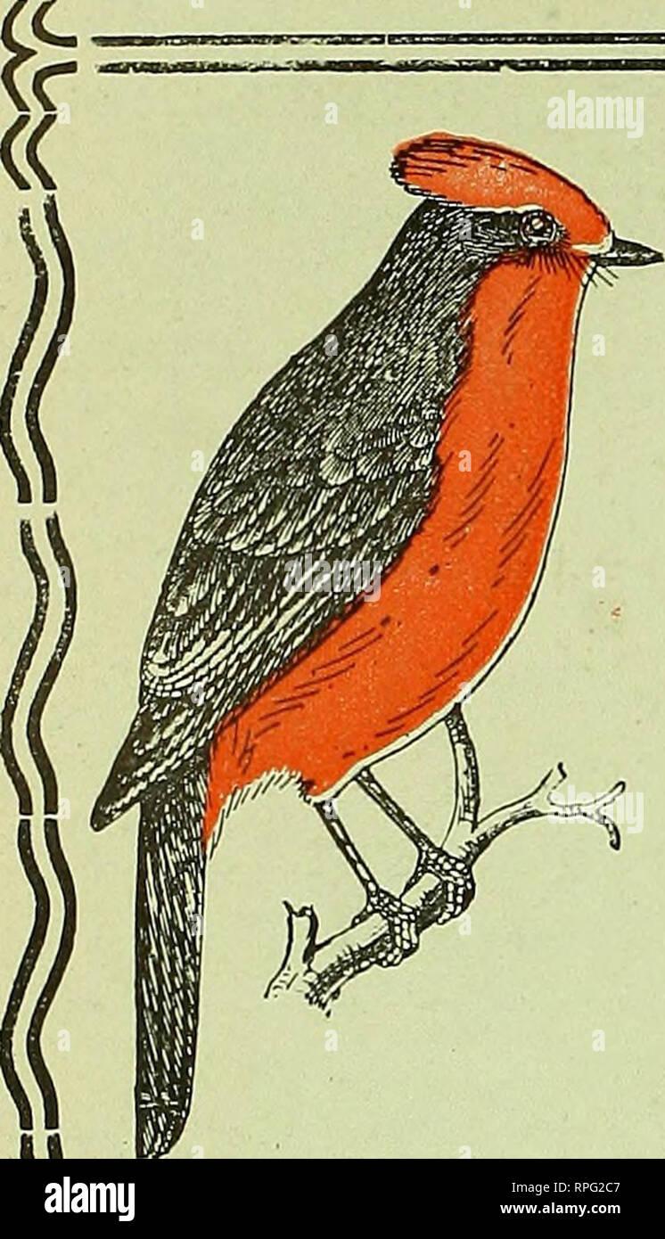 American bird magazine, ornithology  Birds  \^ 'BI'R'D VICTIOJSA'Ry