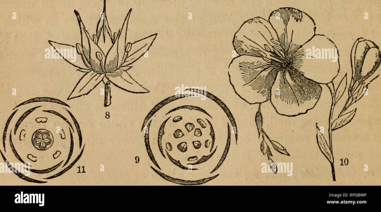 The American Botanist And Florist Including Lessons In The