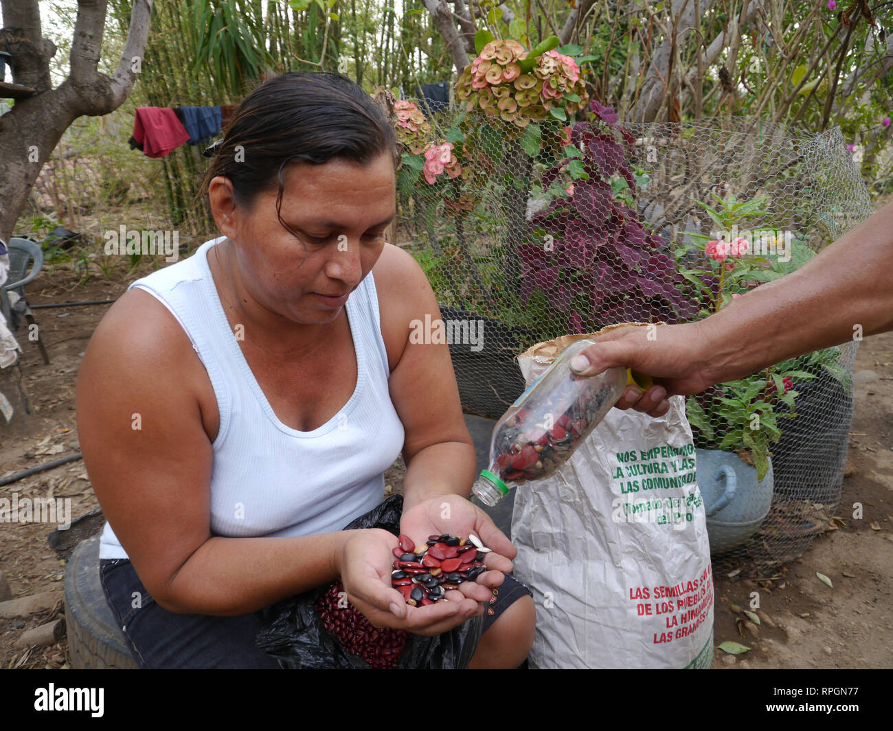 El Salvador  JDS projects in Jujutla. Family of Jose Alberto Garcia (41) and his wife Ana Arely Gonzalez (33) and their five children, Clarissa (17), Nidia (16), Celia (13), Katherine (10) and Emerson (7), village of El Nance. Ana with seeds from the family seed bank. - Stock Image