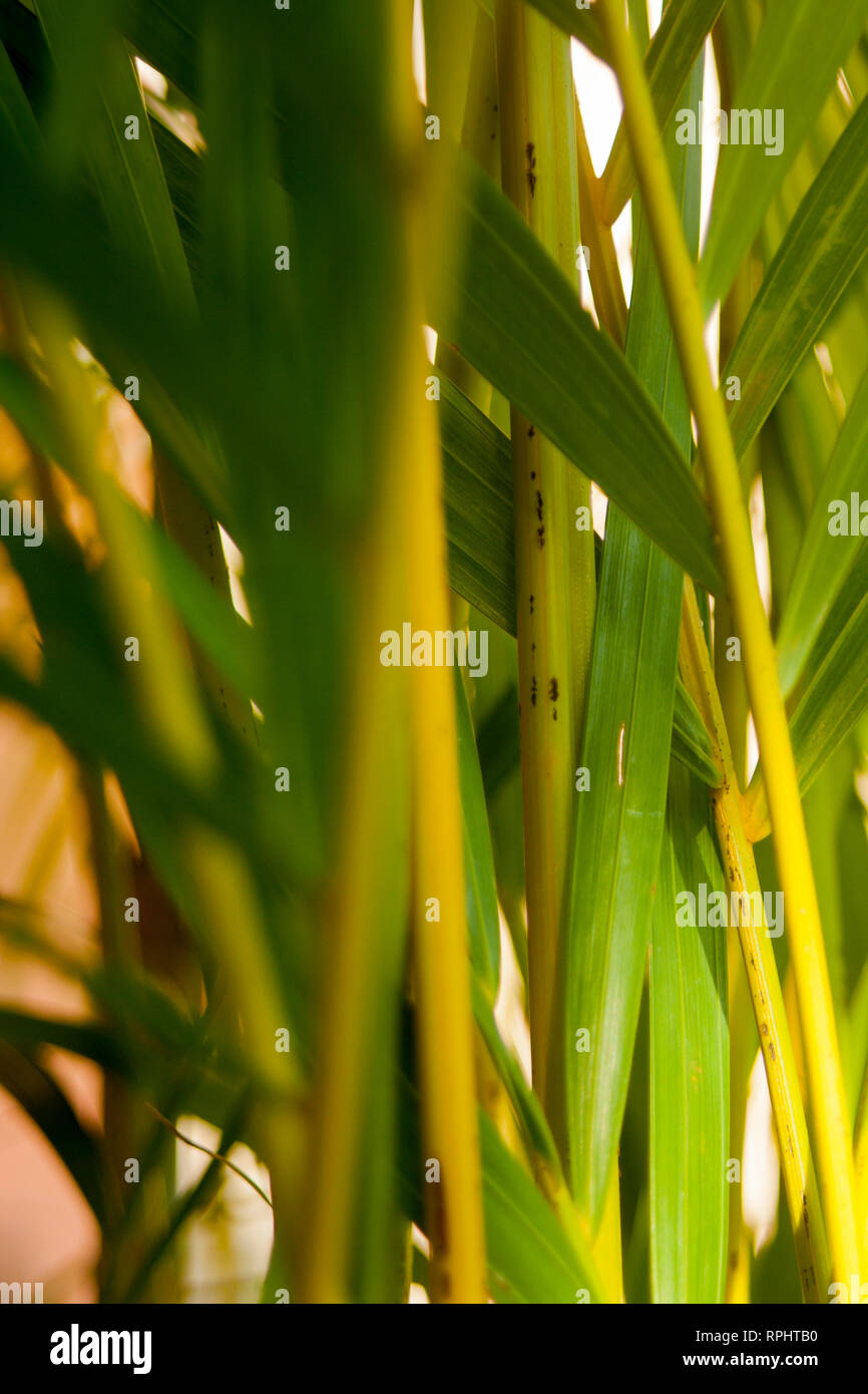 Green stems - Stock Image