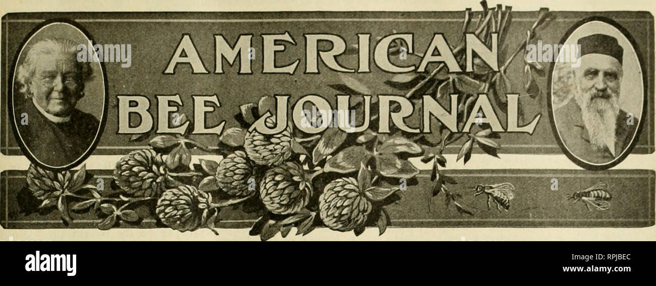 . American bee journal. Bee culture; Bees. Vol. LVI.—No. 8 HAMILTON, ILL, AUGUST, 1916 MONTHLY, $1.00 A YEAR MINNESOTA SNAP SHOTS Items of Interest About Minnesota Beekeepers Gathered By Our Staff Correspondent During a Swing Around the State THE Minnesota beemen are live wires. Those wlio keep in touch with the progress of the industry know already that the beekeepers of that State have been pushing things for some years past. They have a splendid building devoted especially to the exhibition of hive products at the State Fair and better premiums than any other fair offers. They have a separa - Stock Image