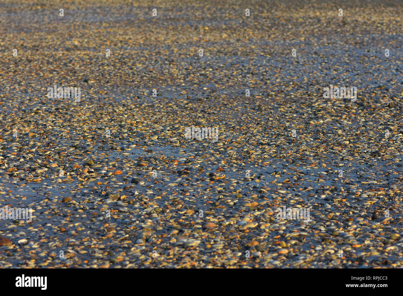 Flat oceanic beach at low tide showing mixture of fine dark sand and various colorful bivalve shells. - Stock Image