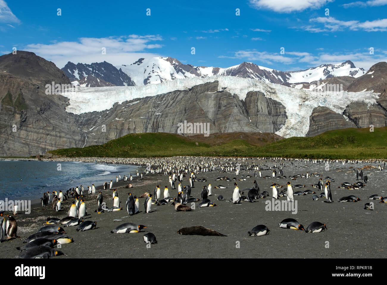 Bertrab Glacier, Gold Harbour, South Georgia - Stock Image