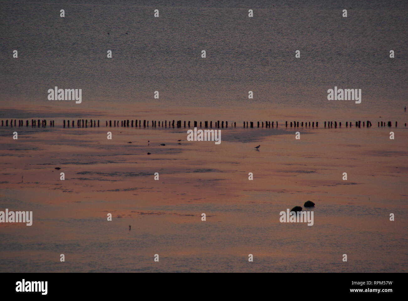 Tidal flat in an evening setting - Stock Image